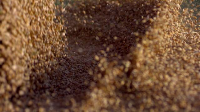 SLO MO CU  Falling wheat grain / Amstetten, Lower Austria, Austria