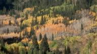 Den Herbst in Aspen