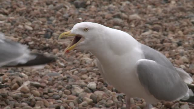 A familiar presence at Britains seaside resorts seagulls have this summer spread fear after ambushing holidaymakers as they tuck into their fish and...