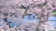 Families picnic under flowering cherry trees in the spring.
