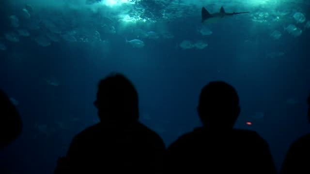 Family and people admire fishes in aquarium