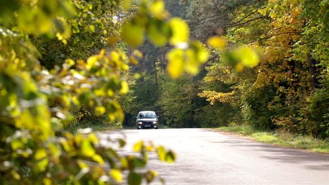 Familienauto ist auf einer Straße in den Wald fahren.