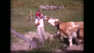 1963 family meets herd of Swiss cows with large cow bells