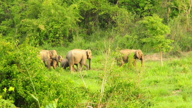 Family of Wild Elephants
