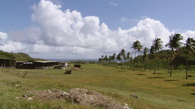 WS Farm on the mountain top  / Brightown, Barbados