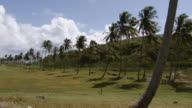 WS PAN Farm on the mountain top  / Brightown, Barbados