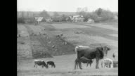Farm w/ people working in field cattle grazing FG MS Polish peasant farmers bent over w/ hoe working soil land XWS Children running toward wooden...