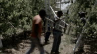 Farm workers walking through orchard with their ladders Piketberg is a small rural town in the Western Cape province of South Africa