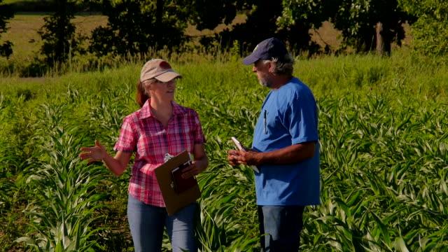 Farmer and Aggricultural consultant talk in ripening GMO corn field.