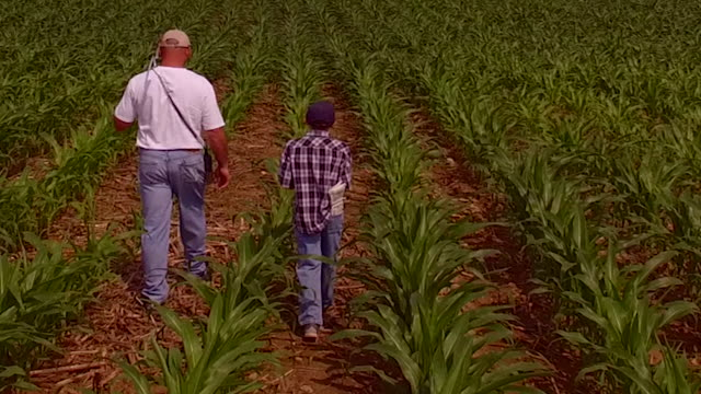 Farmer and his son inspect ripening field of corn