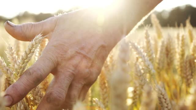 HD-SUPER LANGSAM MO: Farmer wundervollen Das Wheat