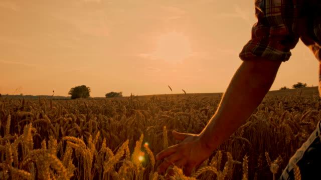 WS CS Farmer Caressing The Wheat