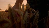 SLO MO Farmer Caressing The Wheat
