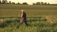 WS PAN SLO MO Farmer carrying bucket of fresh water to calves that are fenced in organic pasture / Columbus, Wisconsin, USA