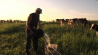 WS SLO MO Farmer carrying bucket of fresh water to calves that are fenced in organic pasture / Columbus, Wisconsin, USA