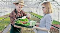 SLO-MO-Bauer Transport Kiste voll mit Gemüse an einen Kunden