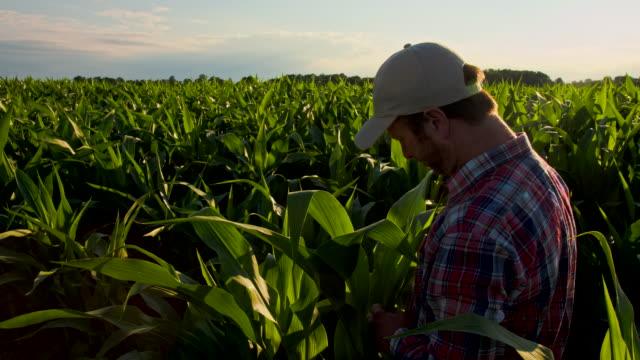 MS CS Farmer Checking The Corn Plants