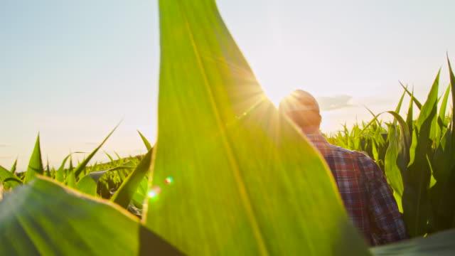 MS TS Farmer Checking The Corn