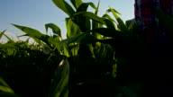 MS CS Farmer Checking The Plants