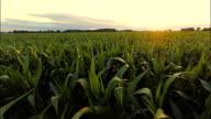 AERIAL Landwirt Überprüfung der Pflanzen