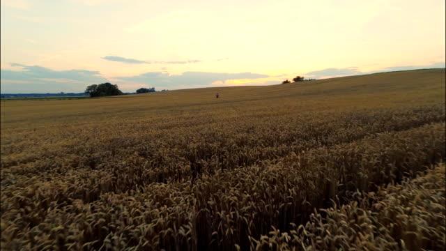 AERIAL Farmer Checking The Wheat Crop