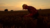 WS CS Farmer Checking The Wheat