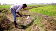 Farmer digging in the field
