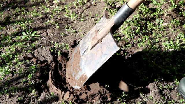 Farmer digging the ground