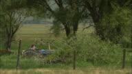 A farmer drives his tractor through a grassy pasture.
