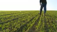 HD: Farmer untersuchen junge Weizen