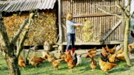 WS-Farmer eine Schar Hühner füttern