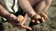 Farmer holding potatoes, close up