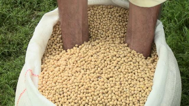 Farmer holding soybeans
