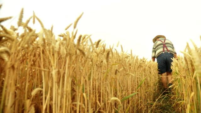 HD SLOW-MOTION: Farmer In A Wheat Field