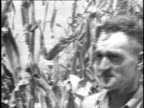1923 CU Farmer in cornfield wiping streams of sweat from his brow / United States
