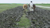 A farmer in rural Bangladesh on the banks of the River Camuna ploughs fresh land for planting seeds with a pair of oxen