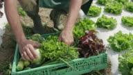 Boer in het veld vullen een krat met produceren