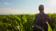 WS CS Farmer In The Field Of Corn