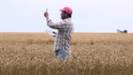 MS DS Farmer in Wheat Field Looking at Crop, Using Tablet Computer / Oyster, Virginia, USA