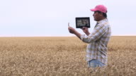MS DS Farmer in Wheat Field Talking to Scientist on Tablet Computer / Oyster, Virginia, USA