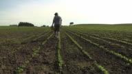 WS SLO MO Farmer inspecting organic soybean field / Columbus, Wisconsin, USA