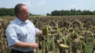 Farmer Inspects Wilted Crops