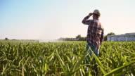 Farmer looking at agricultural sprinklers in corn field