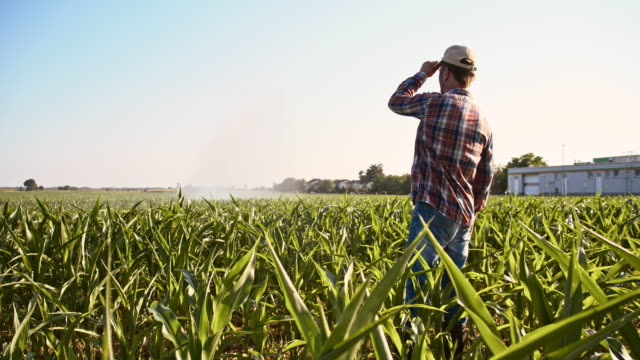 Farmer looking at agricultural sprinklers in corn field