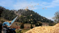 Farmer operate Corn Mill Machines.