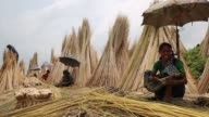 Farmer processing jute fibers from plants in a lake in Bangladesh on August 04 2017 / Jute in Bangladesh is called 'The Golden Fiber'is used for...