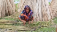 Farmer processing jute fibers from plants in a lake in Bangladesh on August 04 2017 / Jute in Bangladesh is called 'The Golden Fiber' is used for...