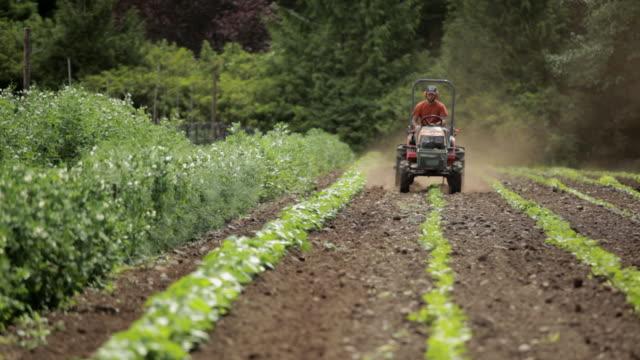 Farmer riding tractor in field