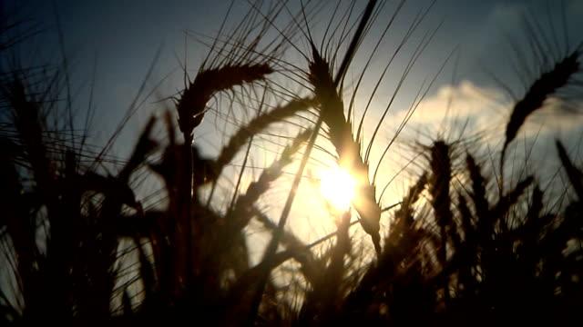 Agricoltore silhouette davanti