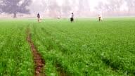 A farmer sprays pesticides at the wheat field